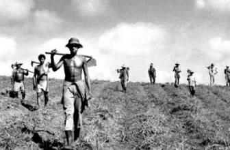 Reforma agrária garante o acesso à terra.