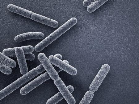 As bactérias estão incluídas no Domínio Bacteria