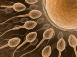 A gametogênese é um processo de reprodução de espermatozoides e óvulos