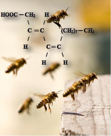 O ácido tetradec-3,5-dienoico é o feromônio de acasalamento das abelhas. Os seus estereoisômeros não são reconhecidos por esses insetos