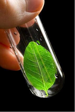 A Química Verde busca meios de alcançar o desenvolvimento sem agredir o meio ambiente, o mesmo ideal do desenvolvimento sustentável