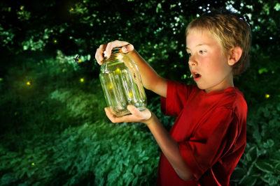 Os vaga-lumes são insetos bastante conhecidos por sua bioluminescência