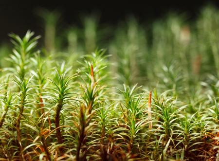 As plantas reproduzem-se por alternância de gerações.