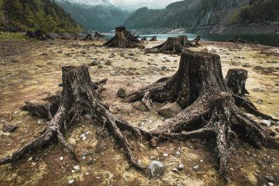 O desmatamento pode fazer com que os organismos causadores de doença fiquem mais próximos ao homem