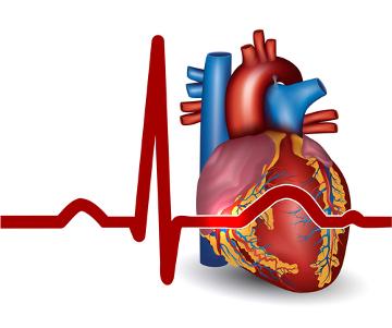 A falta de irrigação sanguínea no músculo do coração desencadeia o infarto