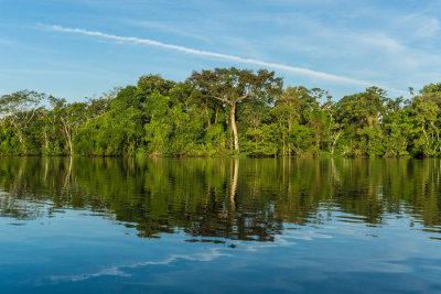 As florestas são essenciais econômica e ecologicamente