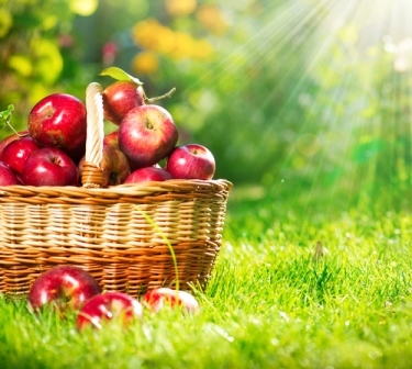 O etileno tem papel fundamental no amadurecimento de frutos