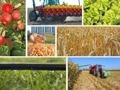 A agricultura é uma atividade econômica que envolve diversos setores da economia, como a indústria, comércio e serviço