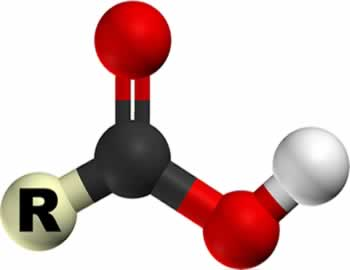 Possui a presença do grupo funcional carboxila ligado à cadeia carbônica