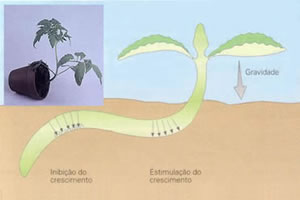 A interferência de fatores externos no crescimento dos vegetais.