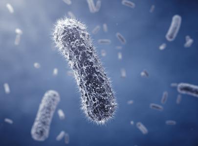 As bactérias são usadas na fabricação de insulina e hormônio do crescimento através de técnicas de DNA recombinante