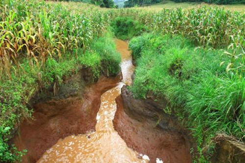 A erosão do solo é mais frequente nas áreas em que a cobertura vegetal foi retirada para atividades de agricultura e pecuária