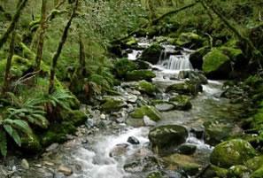 Interior de uma floresta Temperada.