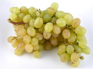 A giberelina pode ser usada comercialmente na produção de frutos. Nas uvas Thompson, atua aumentando o fruto e deixando os cachos mais soltos