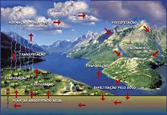 O ciclo de renovação da água.