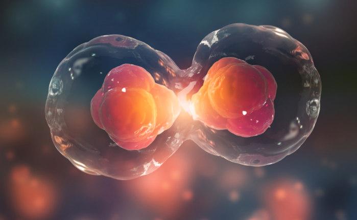 A divisão celular é um processo fundamental para os seres vivos.