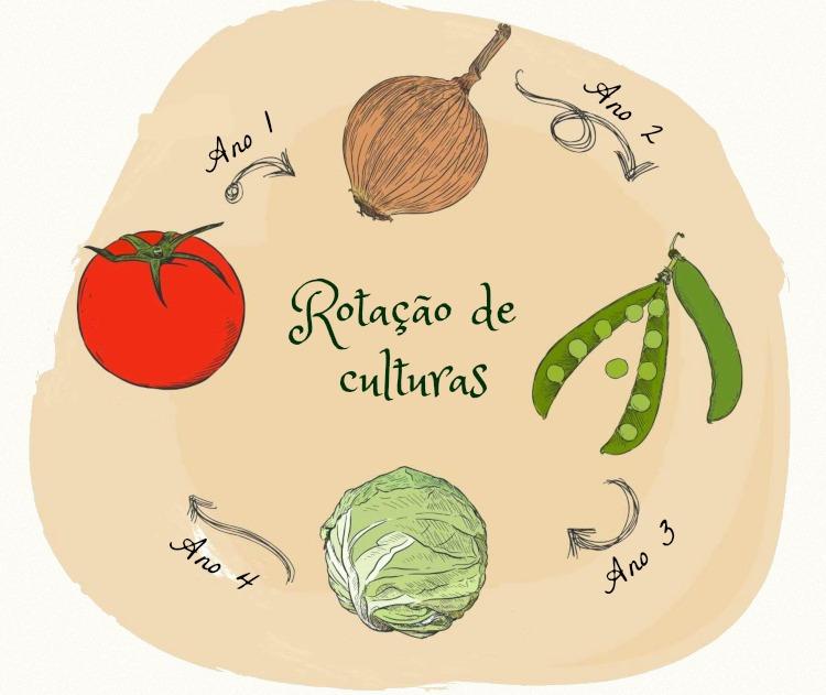 A rotação de culturas ilustrada na imagem representa a alternância de cultivos em uma mesma área.