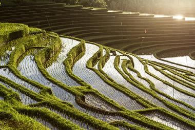 A produção de alimentos requer o uso de muita água para garantir a segurança alimentar