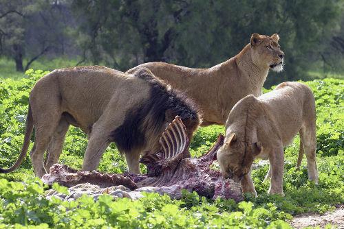 Em todos os ecossistemas existentes, é possível observar diferentes relações de alimentação