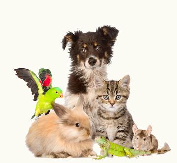 Quais características permitem seres tão distintos serem classificados como animais?