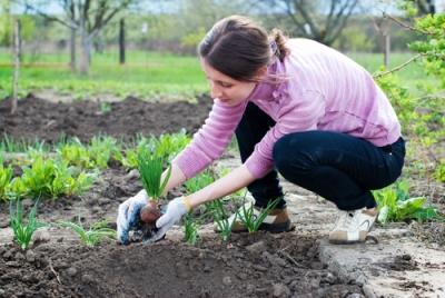 Existem diversas técnicas de plantio e conservação dos solos agricultáveis