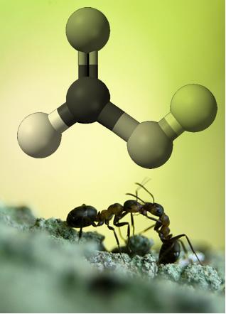 O ácido fórmico recebe esse nome porque está presente em grande quantidade na formiga vermelha