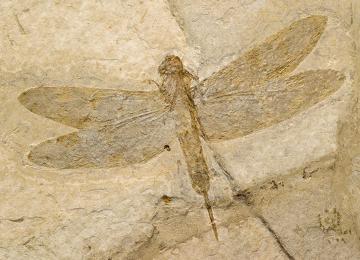 Um fóssil pode fornecer informações a respeito de como era o planeta há milhões de anos