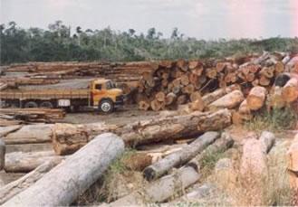 Área desmatada com madeiras prontas para o transporte.