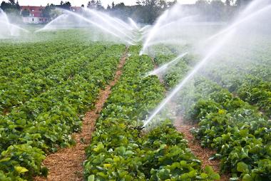 Os sistemas de irrigação utilizam muita água, o que aumenta a necessidade de economia