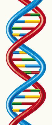 O DNA é responsável pela hereditariedade