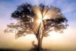 A fotossíntese é essencial para a viabilidade da vida.