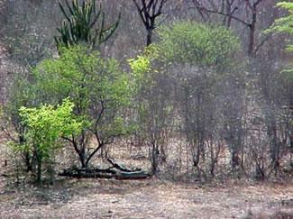Aspecto da vegetação da caatinga
