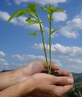 A preservação ambiental é de nossa responsabilidade