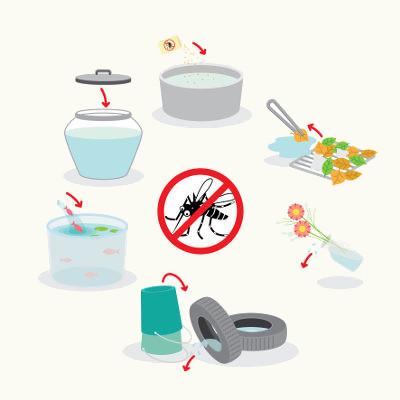 A dengue pode ser prevenida por meio de medidas que visem à diminuição dos mosquitos transmissores