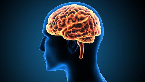 A morte encefálica ocorre quando as funções do encéfalo são interrompidas