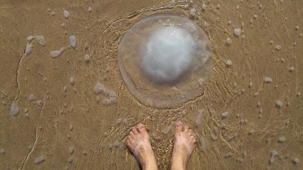 Fique atento: águas-vivas podem ser encontradas na areia da praia.