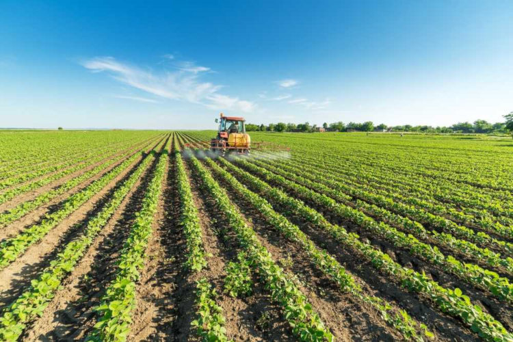No Brasil, uma das principais monoculturas é representada pela soja, produto bastante exportado pelo país.
